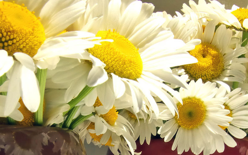 Summer Flowers delivered in Catoosa