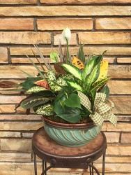 Ceramic Dish Garden  from Catoosa Flowers in Catoosa, OK