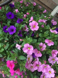 Hanging Basket  from Catoosa Flowers in Catoosa, OK