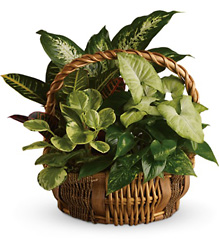 Emerald Garden Basket from Catoosa Flowers in Catoosa, OK